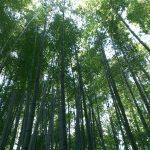 鎌倉観光の旅!鎌倉の大仏の胎内拝観&報国寺で美しい竹林に囲まれてお茶を頂き、鎌倉釜飯かまかまで釜飯を喰らう。
