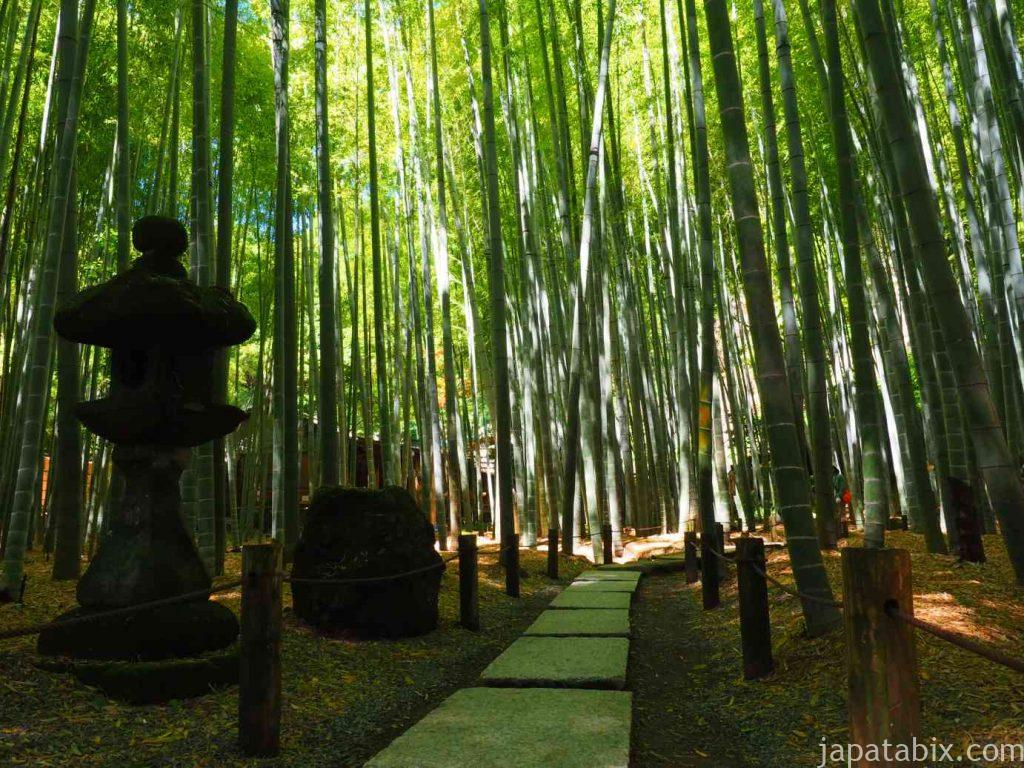 報国寺 竹林 竹の庭
