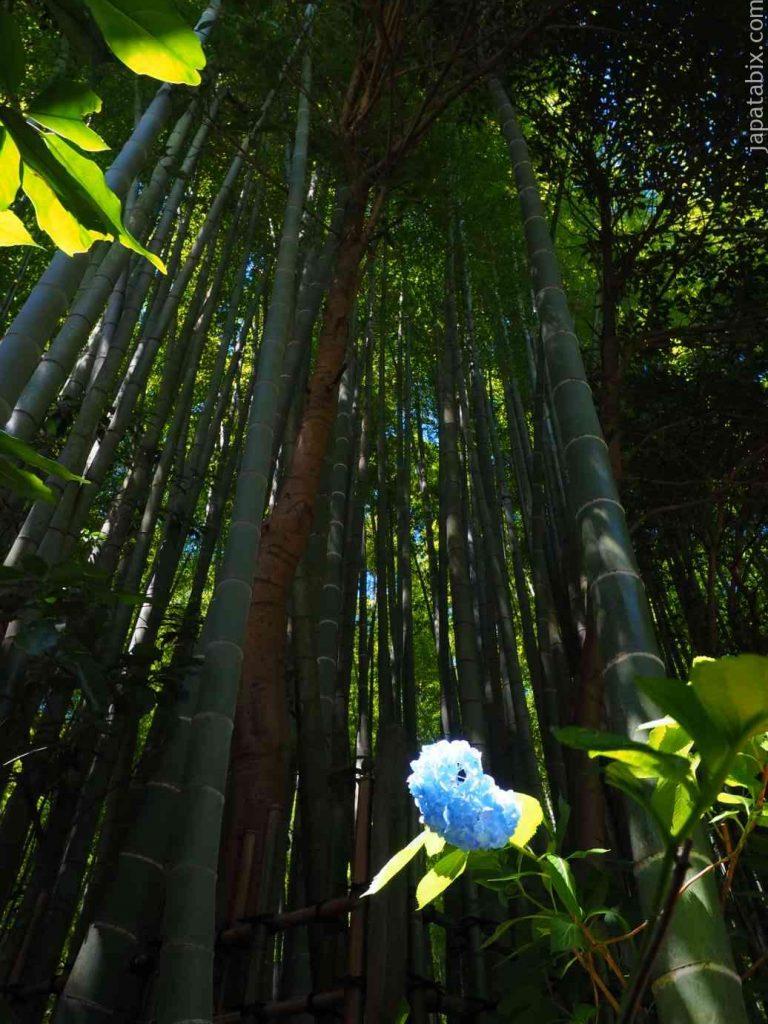 報国寺 紫陽花