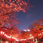 2017年埼玉・東京お花見観光!石戸蒲桜、目黒川や六義園!速報版