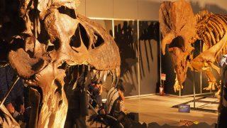 横浜幕張観光!横浜恐竜展2017とギガ恐竜展2017と銀座梅林と。