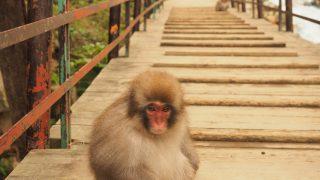 長野観光!地獄谷野猿公苑で猿見学。諏訪のうなぎ小林と旦過の湯を巡る。