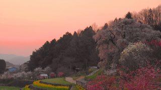 2017年 奈良お花見観光!朝焼けの又兵衛桜を堪能する。