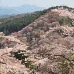 2017年 奈良お花見観光!「一目千本」の吉野山を歩き回った。