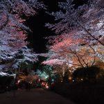 滋賀でお花見!三井寺(園城寺)の夜桜を堪能!