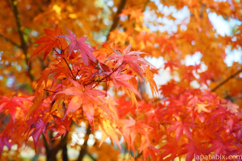 紅葉の南禅寺