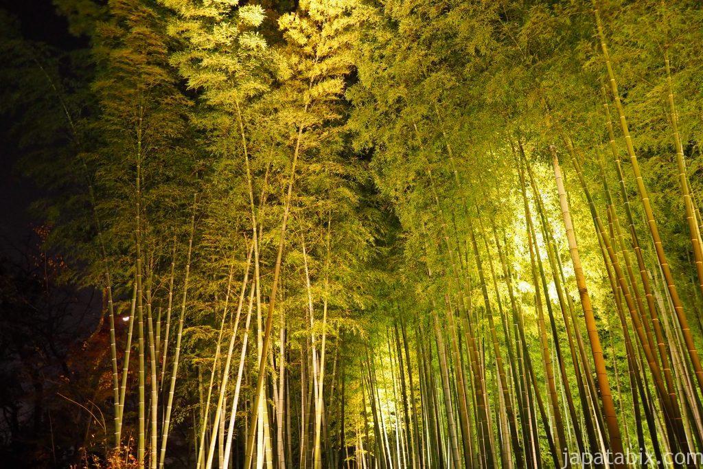 高台寺の竹林ライトアップ