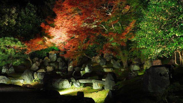 圓徳院の紅葉ライトアップ