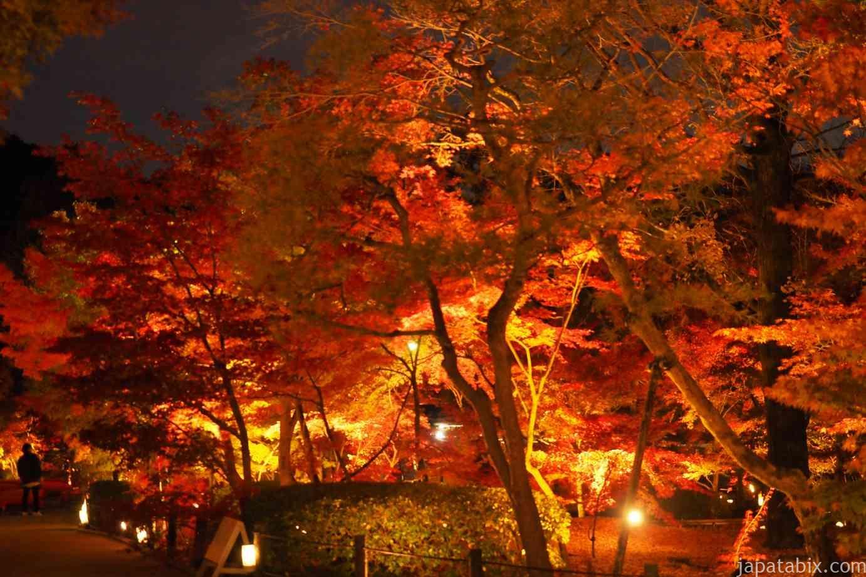 京都 紅葉 永観堂 夜間特別拝観