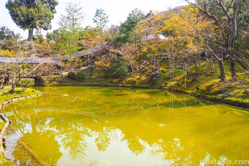 京都 高台寺 臥龍池の桜