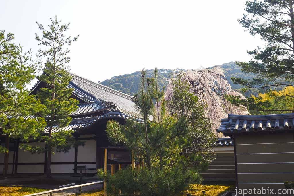 京都 高台寺 外から見る枝垂れ桜