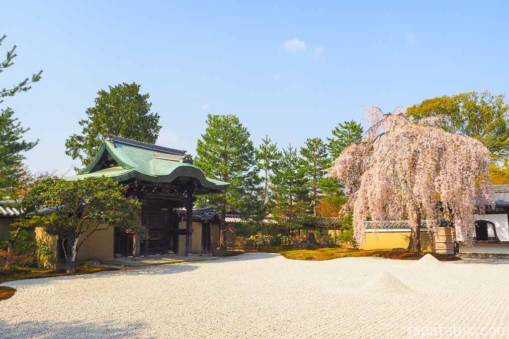 京都 高台寺 波心庭の枝垂れ桜
