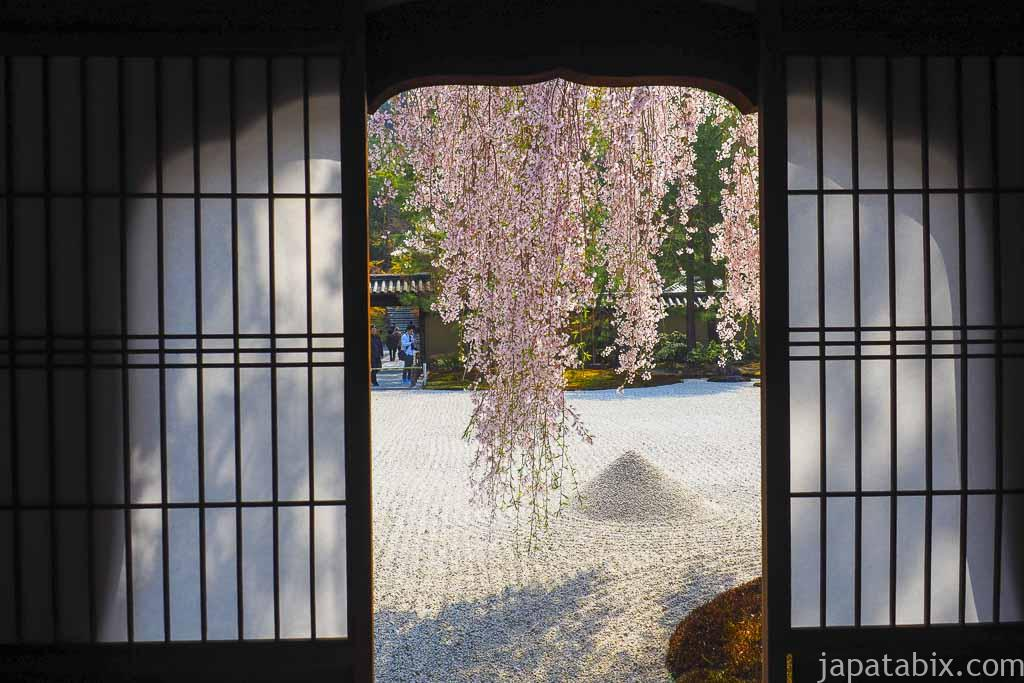 京都 高台寺 窓から見る波心庭の枝垂れ桜