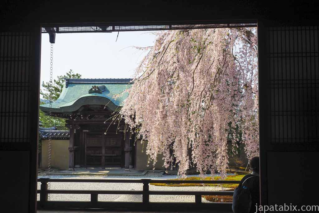 京都 高台寺 方丈から見る波心庭の枝垂れ桜