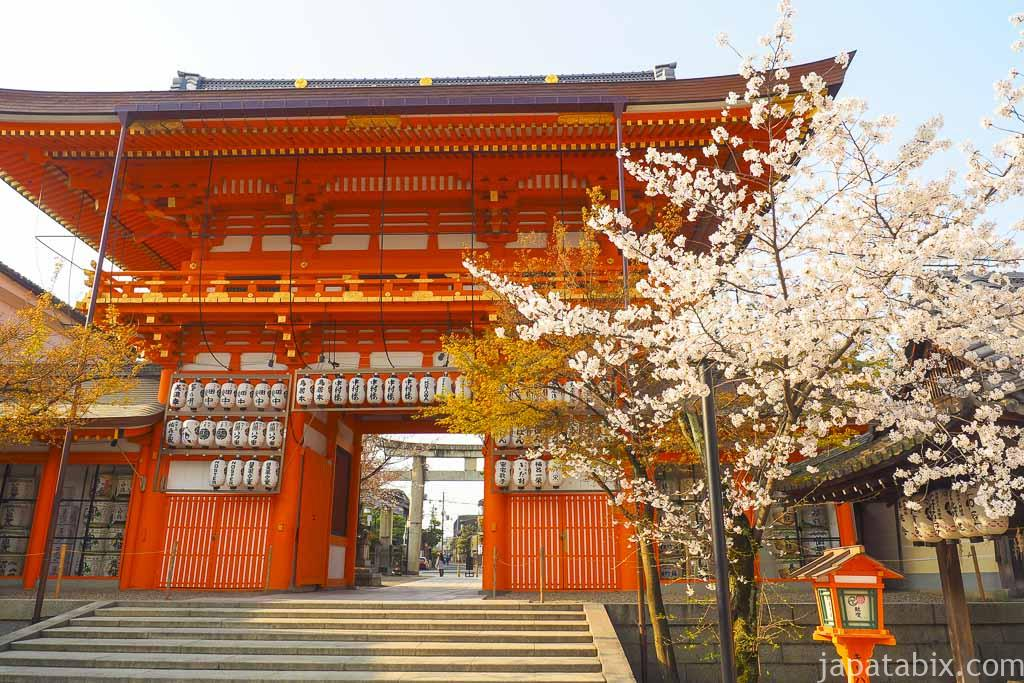 京都 八坂神社の桜