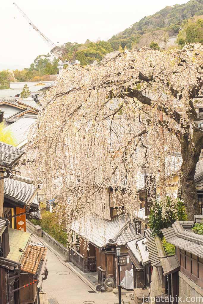 京都 早朝の東山散策 産寧坂のしだれ桜