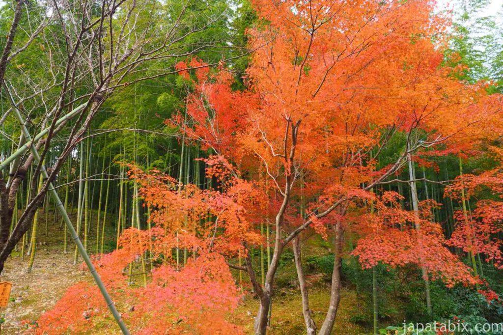 京都 嵐山 天龍寺 早朝拝観 竹林と紅葉