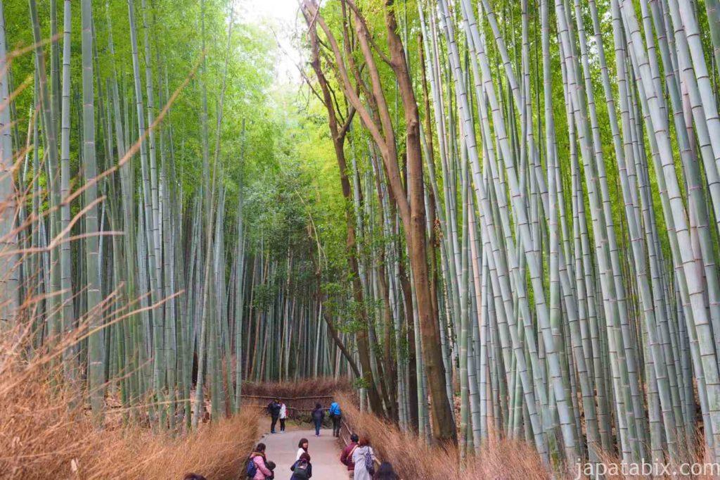京都 嵐山 天龍寺 早朝拝観 紅葉 竹林の小径