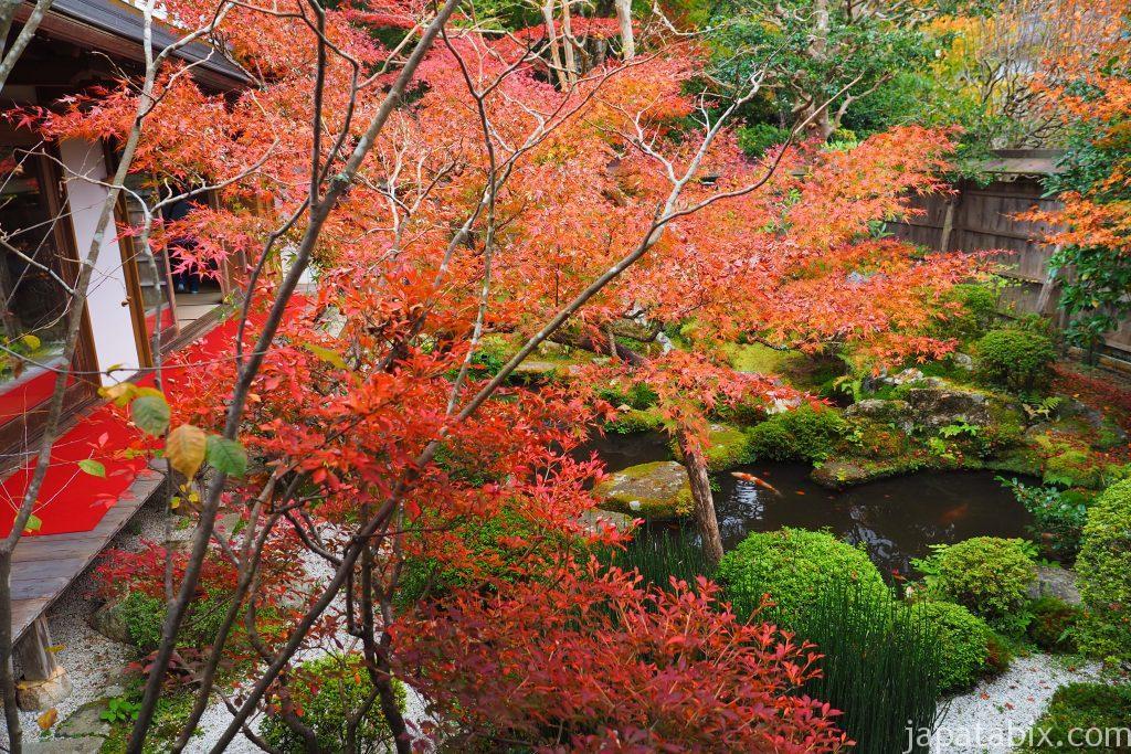 宝泉院の額縁庭園 『盤桓園』の紅葉