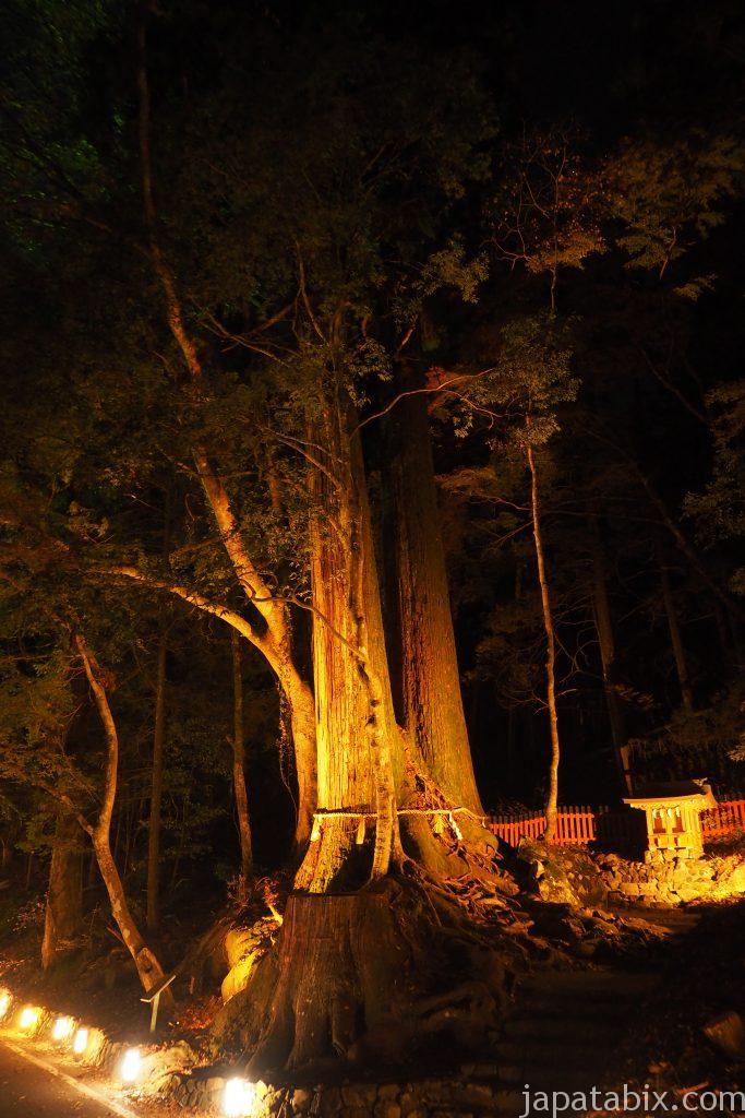 貴船神社 相生の杉