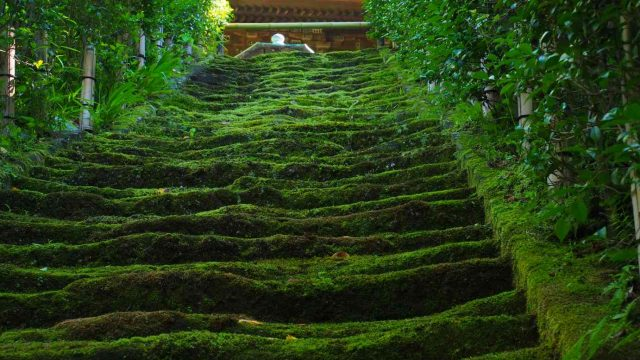 杉本寺 苔の石段