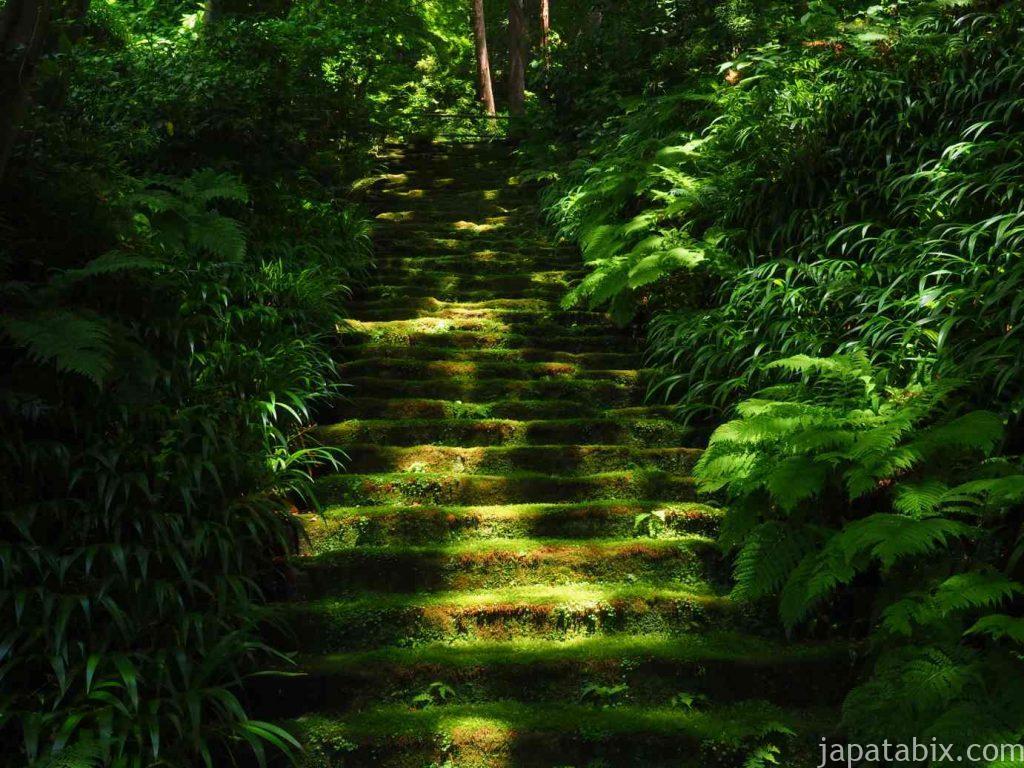 妙法寺 苔の石段 晴れ