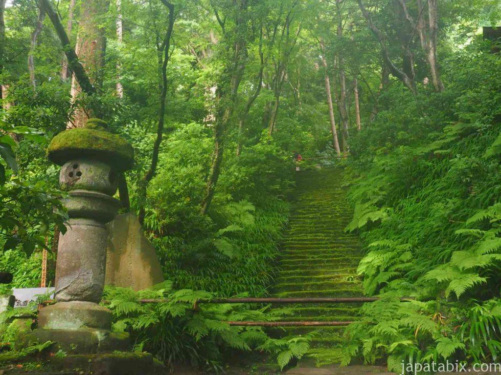 妙法寺 苔の石段 梅雨空