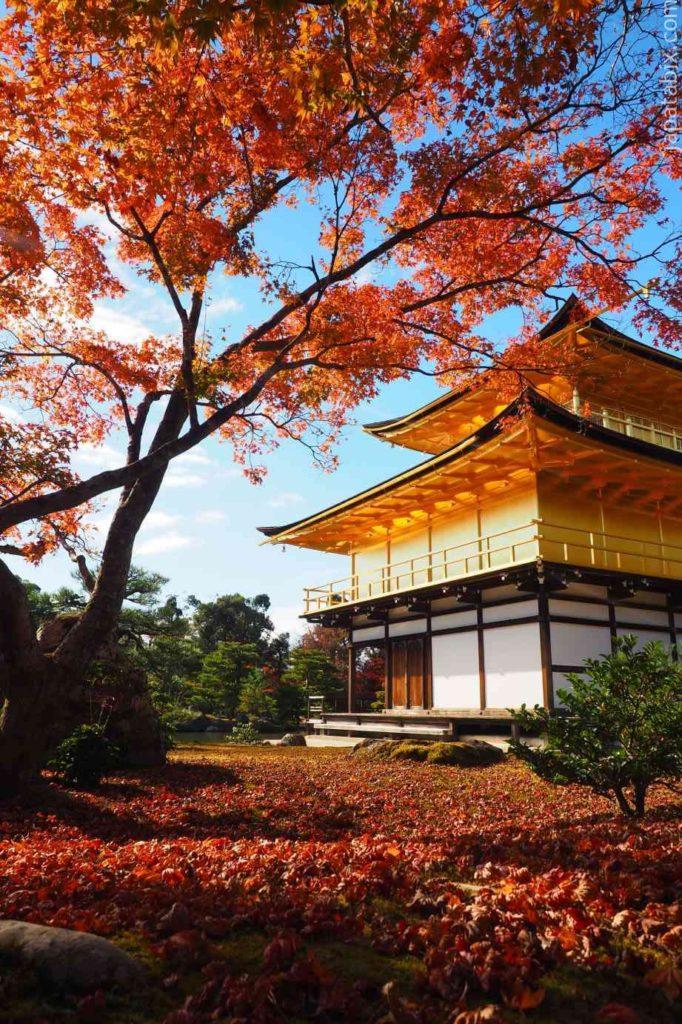 京都 金閣寺 紅葉 舎利殿