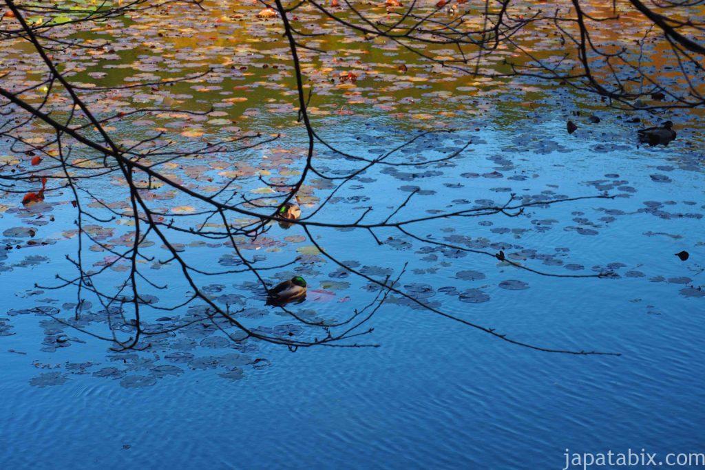 京都 龍安寺 紅葉 鏡容池