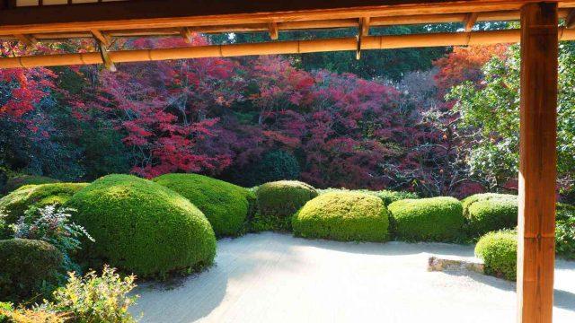京都 詩仙堂 唐様庭園のサツキと雇用