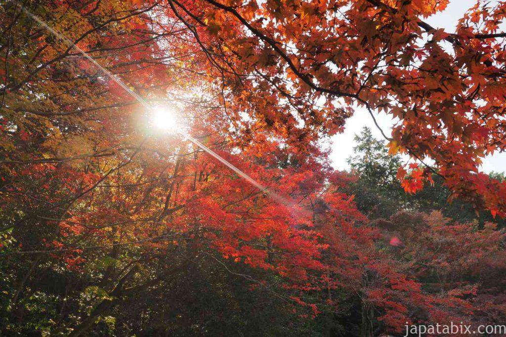 詩仙堂 百花塢の紅葉