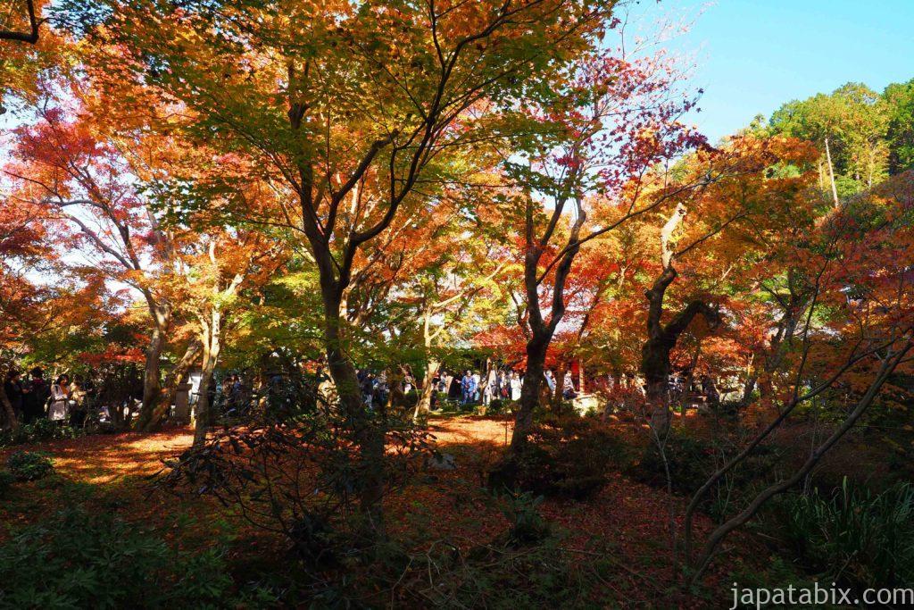 京都 一乗寺 圓光寺 紅葉 十牛の庭