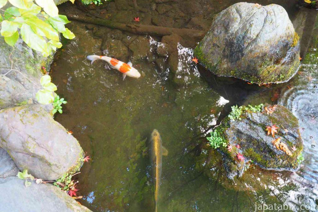 京都 大原 宝泉院 庭園