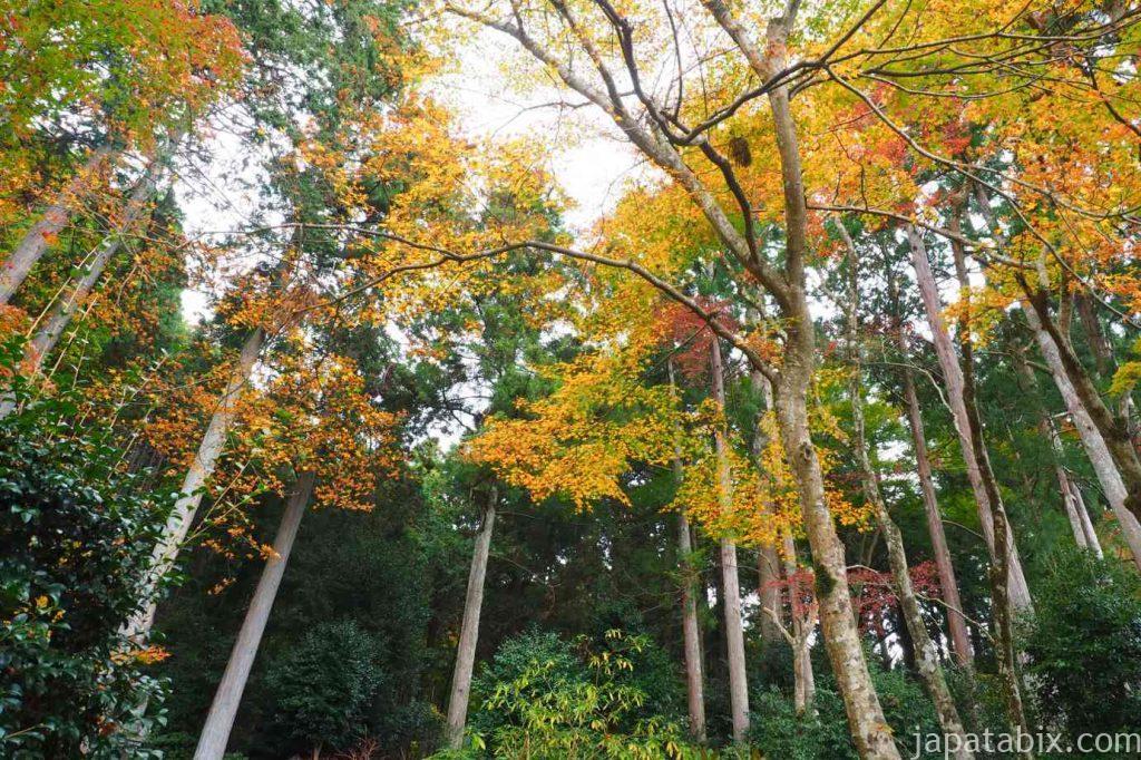 大原 勝林院 紅葉