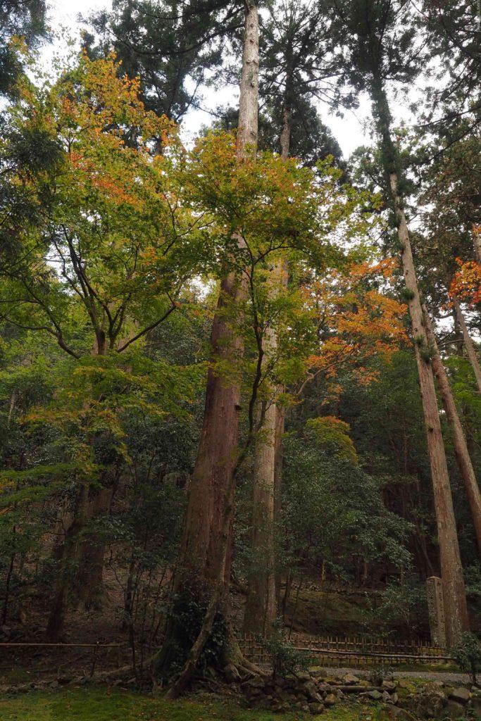 京都 大原 寂光院 紅葉