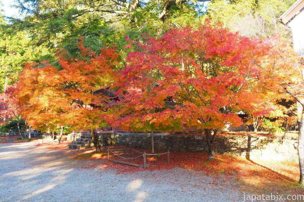 京都 高雄 神護寺 紅葉した境内