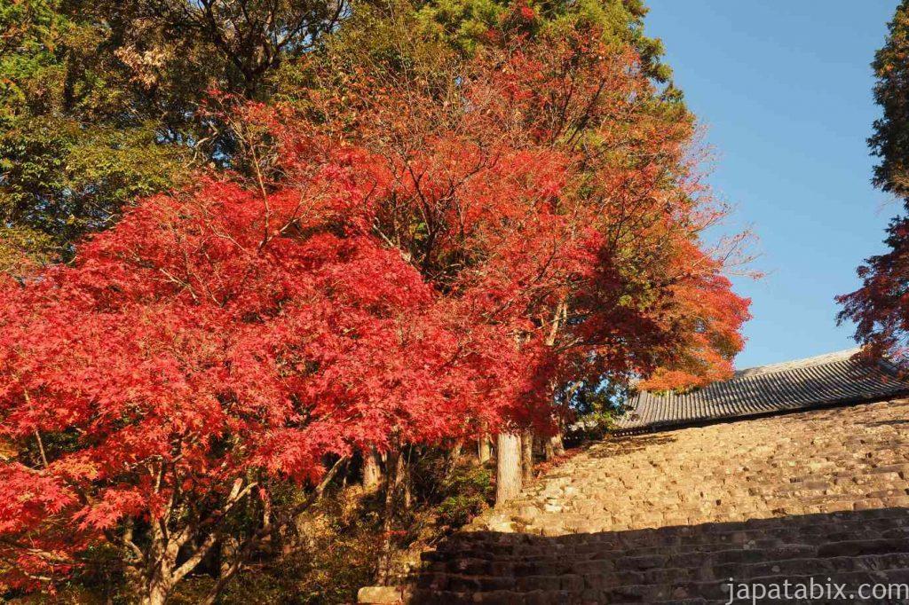 京都 高雄 神護寺 金堂への石段と紅葉