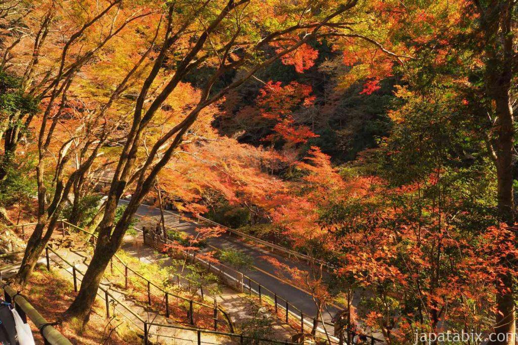 京都 高雄 高山寺 紅葉