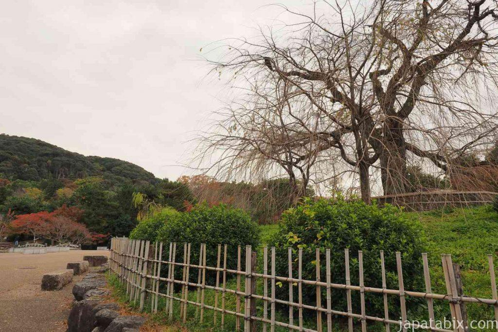 京都 東山 円山公園の枝垂れ桜と紅葉