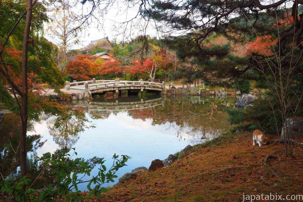 京都 東山 円山公園の池と紅葉と猫
