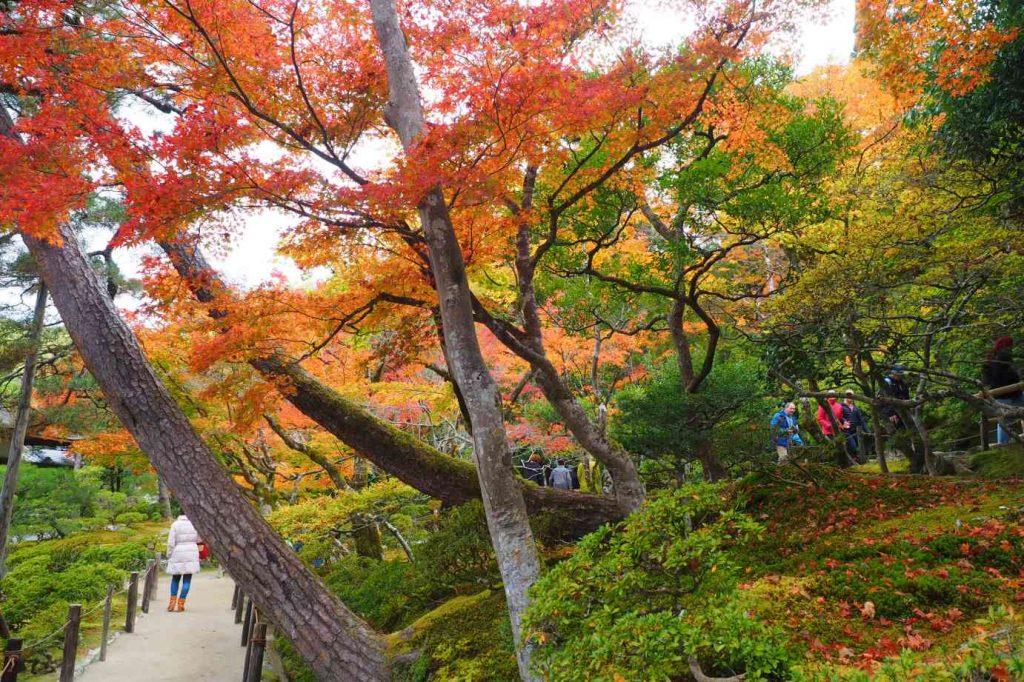 京都 銀閣寺 庭園の紅葉