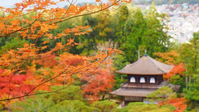 京都 銀閣寺 紅葉 展望台からの眺め