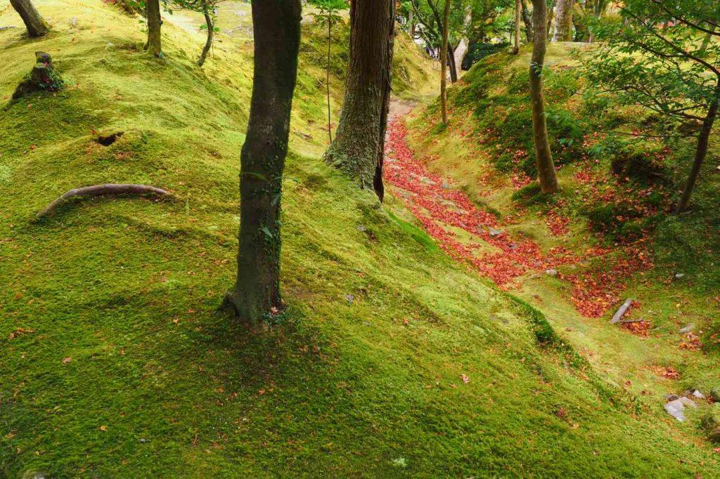 京都 銀閣寺 苔と紅葉