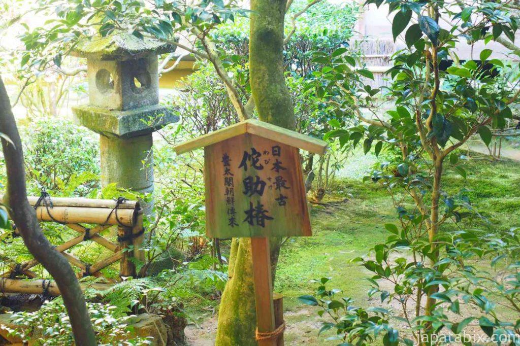京都 龍安寺 侘助椿