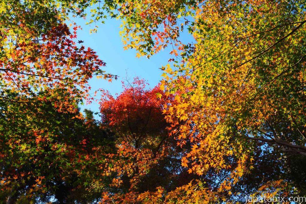 京都 龍安寺 鏡容池の紅葉