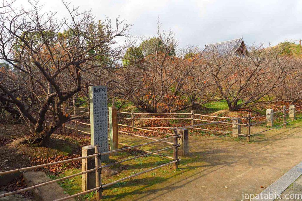 京都 仁和寺 秋の御室桜