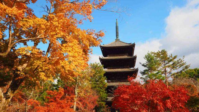 京都 仁和寺 五重塔と紅葉