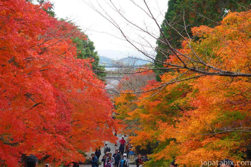 京都 嵯峨 二尊院 紅葉の馬場