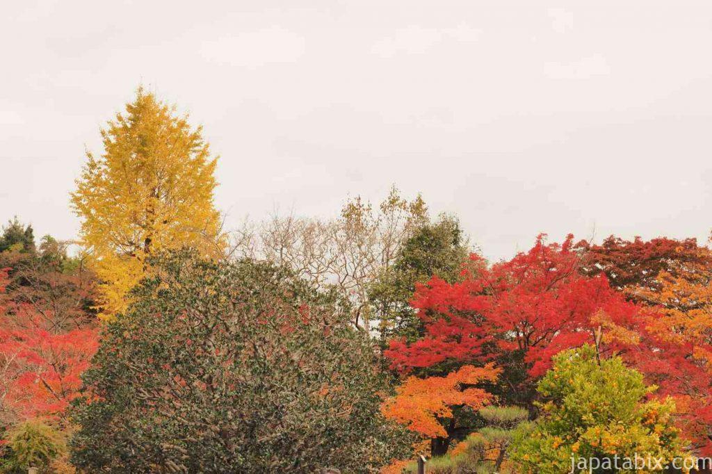 京都 嵯峨 二尊院 境内の紅葉