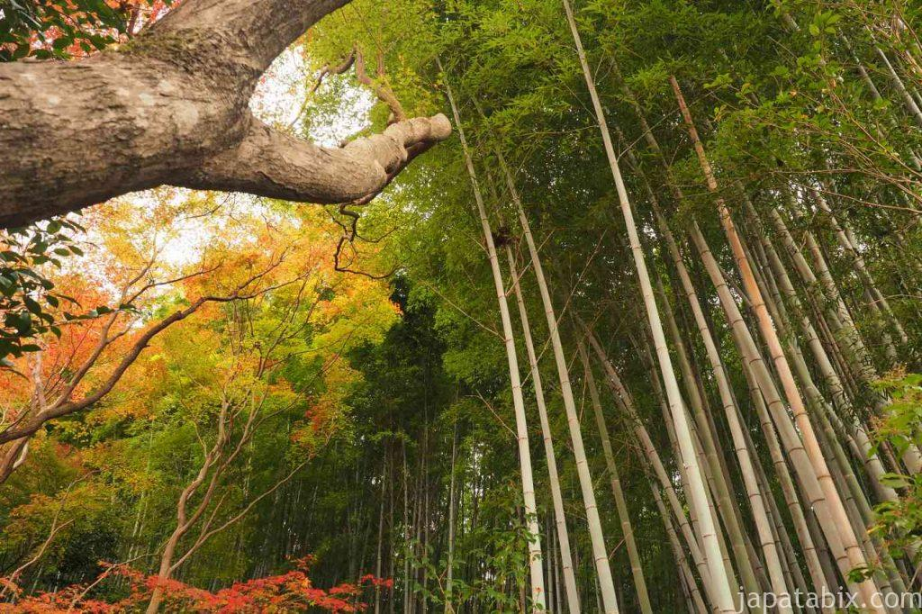 京都 嵯峨 祇王寺 竹林と紅葉